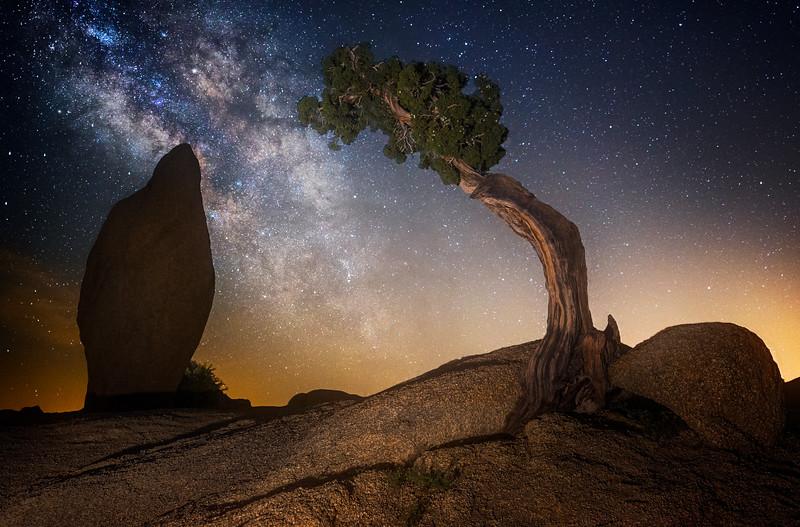 Lone Tree Juniper Milkyway @ Joshua Tree National Park