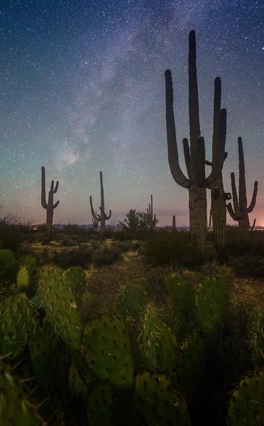 Peaceful night in the Desert.
