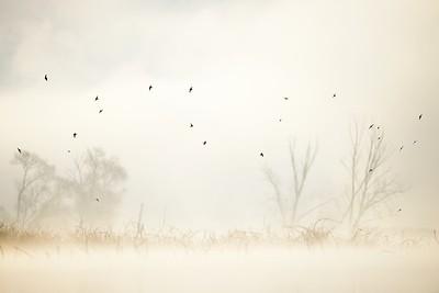 Dymówki we mgle