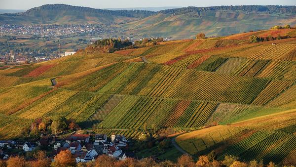 Fall colors in the wineyards of Weinstadt. Herbstfarben in den Weinbergen
