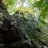 Looking up a steep cliff, a tree clings to the rocks with exposed roots