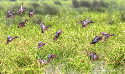 Here's another group landing with full flaps