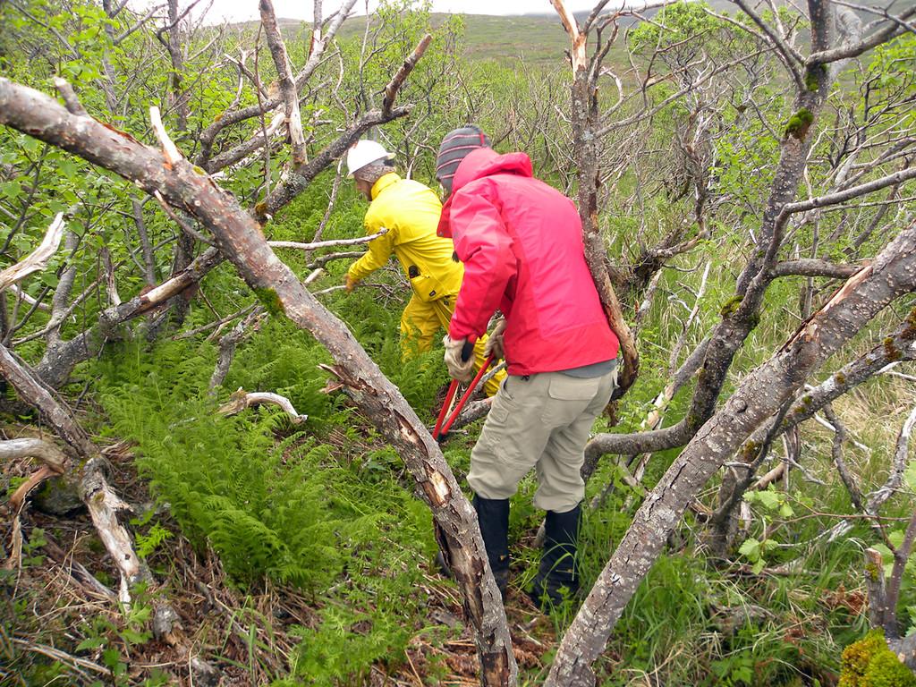 Alaska: Kanatak Trail on the Becharof National Wildlife Refuge