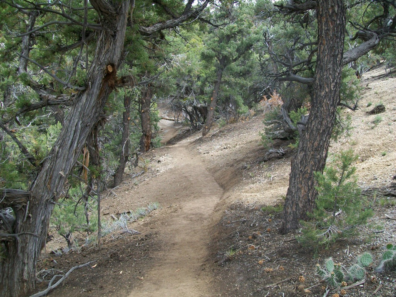 Nevada:  Blue Tree Trail System
