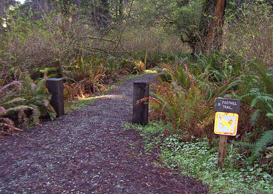 California: Foothill Trail