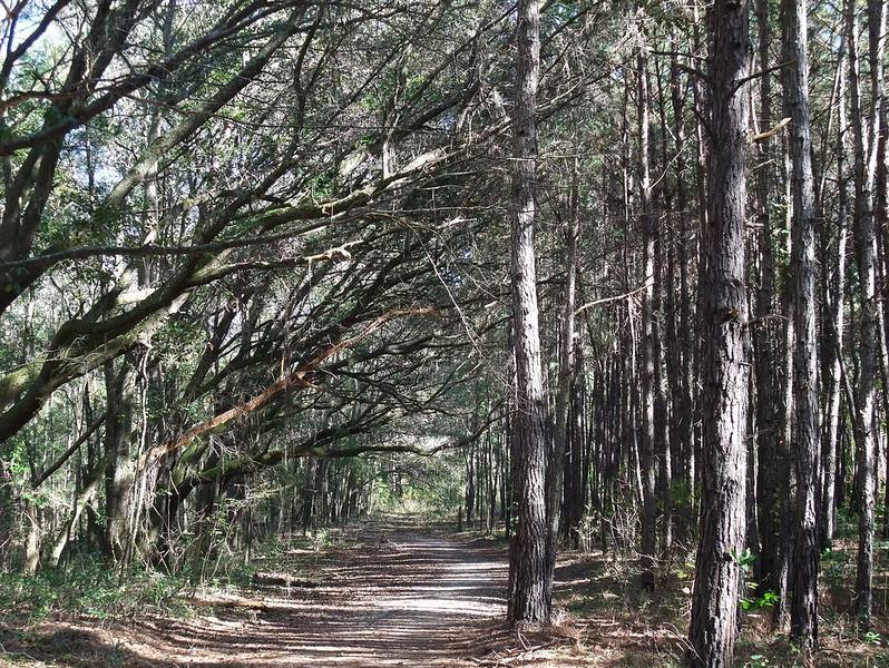 Florida: Miccosukee Canopy Road Greenway