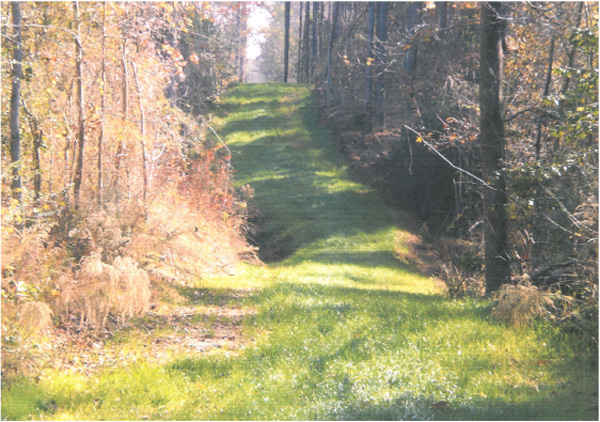 Mississippi:  Longleaf Trace Equestrian Trail
