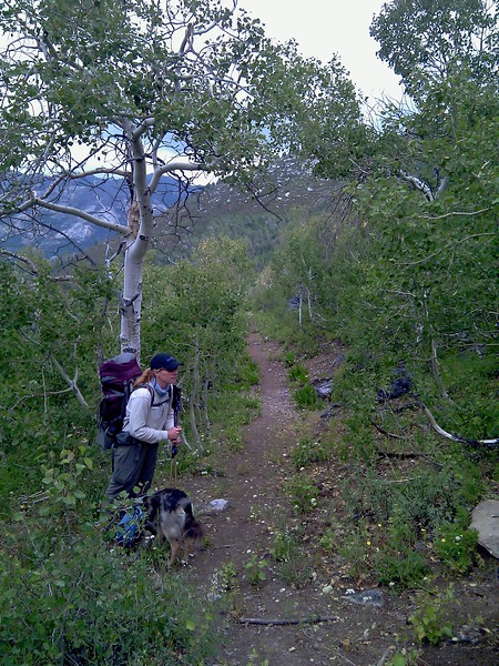 Nevada: Ruby Crest Trail Maintenance