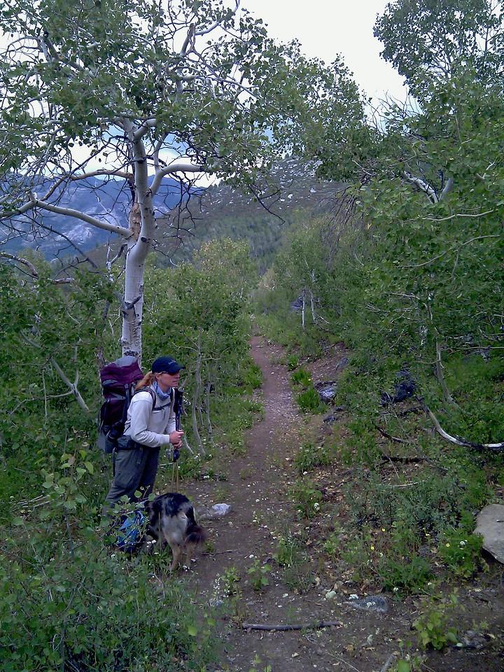Nevada: Ruby Crest Trail Maintenance