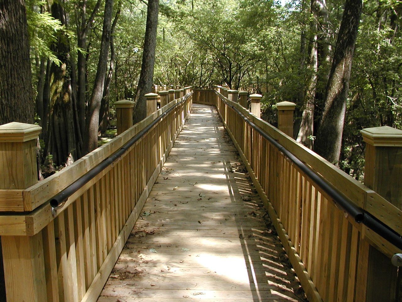 Mississippi:  Sky Lake Boardwalk