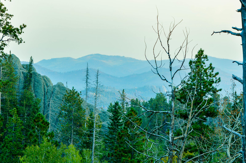 Ponderosa Pines & The Black Hills