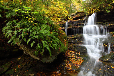 Fern-Covered Rock and Hidden Falls, Rickets Glen State Park