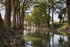 Cypress Lined Creek in Hill Country, Texas