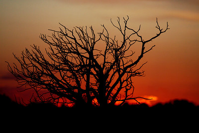 Tree and Sunset, Arches NP, Moab, Utah