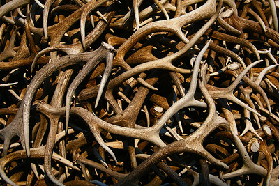 Elk Antler arches, Jackson Hole, Wy