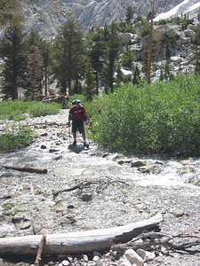 Shaggy crossing the brook near Trail Camp
