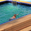 our friend Frank doing his daily 1 hour swim