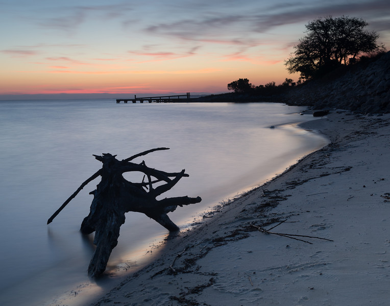 Driftwood Twilight
