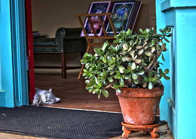 This cat just wondered into this art store in Hawi Town and took up residence.  Past life resident?