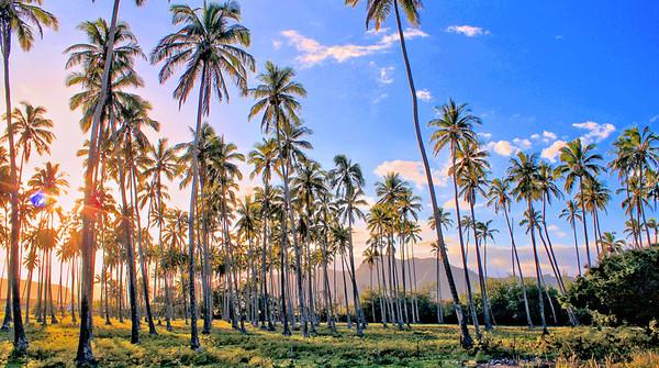 Kapa'a Palms - Kauai, Hawaii