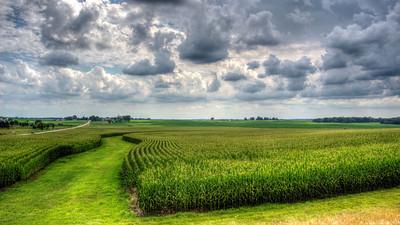 Summer corn near Oregon, Illinois