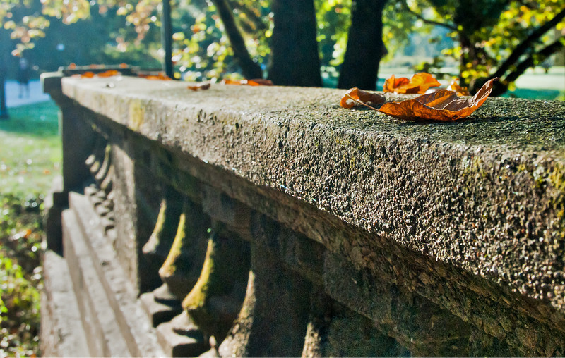Fall Leaf on a Bridge at Cherokee Park in Louisville KY