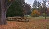 Fall_at_Bernheim_Arboretum