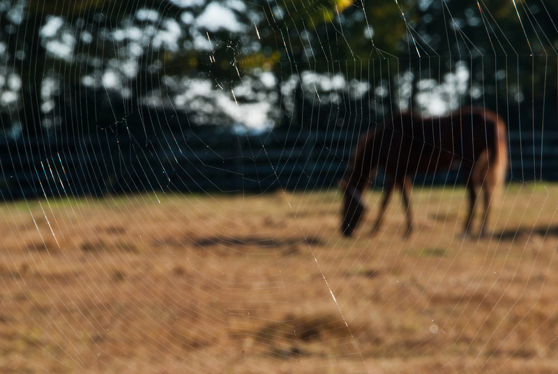 Spider Web View of a Kentucky Horse