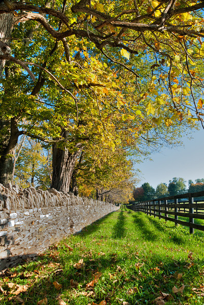 Fence Along a Kentucky Horse Farm