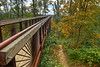 Early Fall Color at the Canopy Walk of Bernheim Arboretum