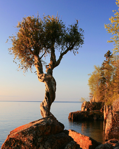 Spirit Tree - Grand Portage, Minnesota