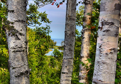 High-Definition Birch