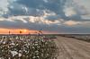 Cotton Road Sunset