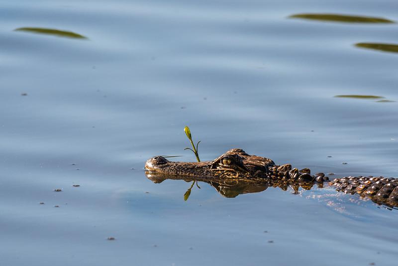 Mr. Alligator