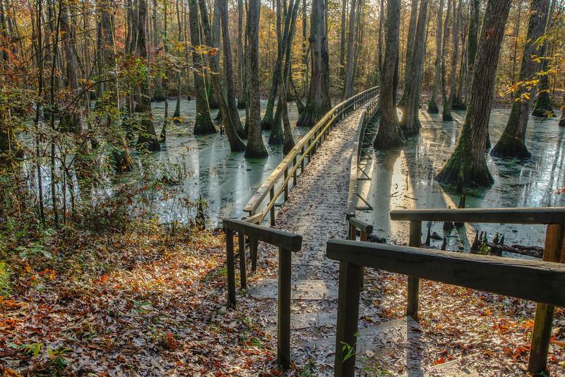 Cypress Swamp Bridge