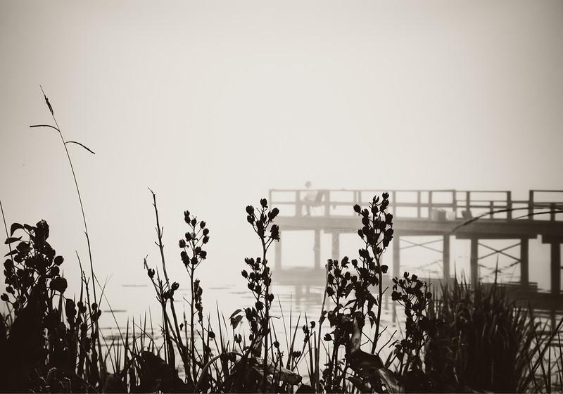 Creamtone Fishing on a Pier in the Fog