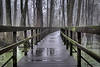 Cypress Swamp Bridge