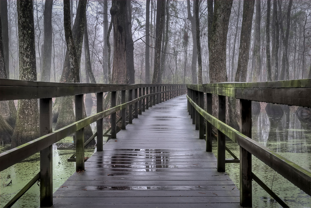 *Cypress Swamp Bridge -  Foot bridge through the cypress swamp near mile marker 122 on the Natchez Trace Parkway.  Shot on a foggy morning after an overnight rain.
