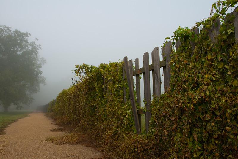 Foggy Path along a Fence