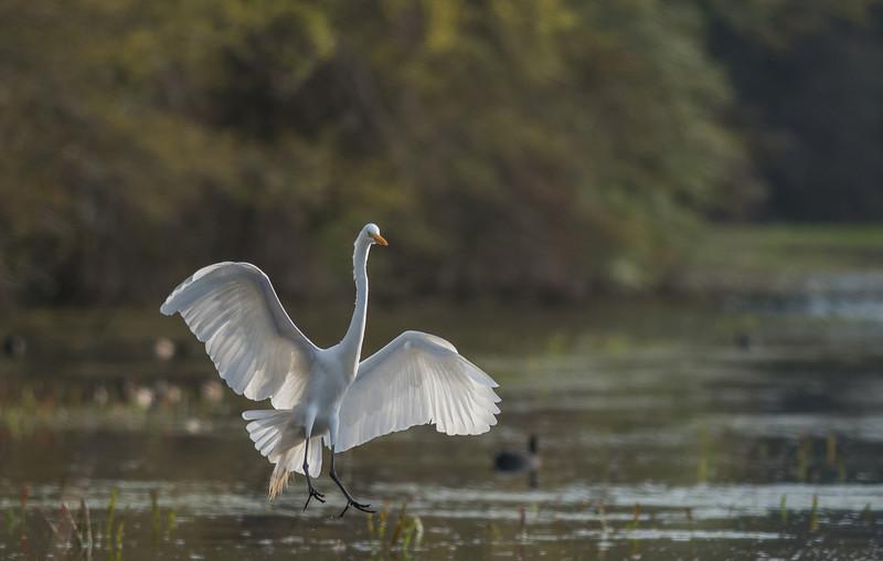 Egret Landing