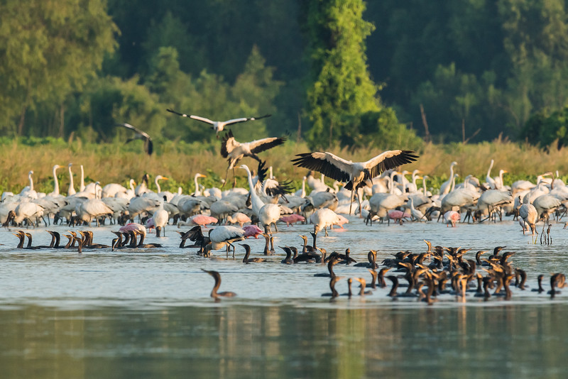 Water Birds At St. Catherine Creek