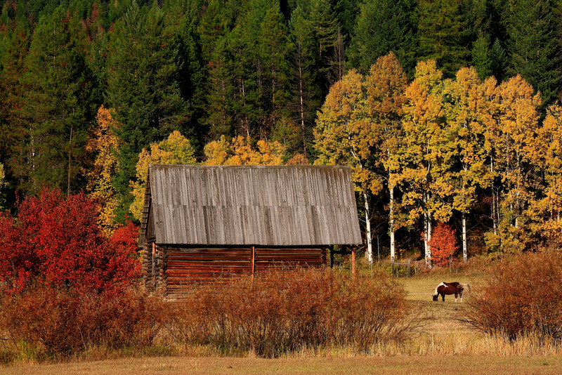 Fall Barn - Near Columbia Falls, Montana