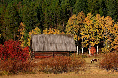 Fall Barn - Near Columbia Falls, Montana