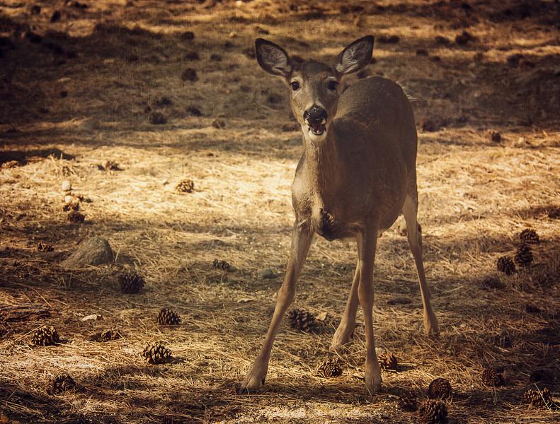 4-Bambi