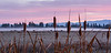 Cattails, Fog and Mountains