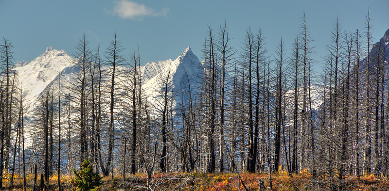 Montana Mountains Through Burned Out Trees