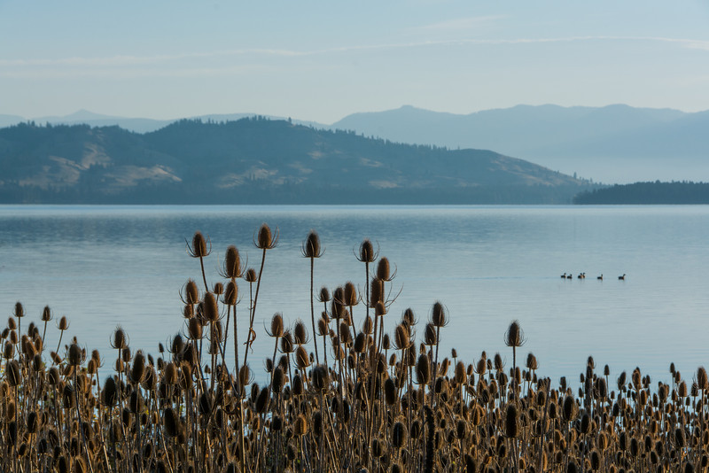 Big Arm State Park at Flat Head Lake Montana