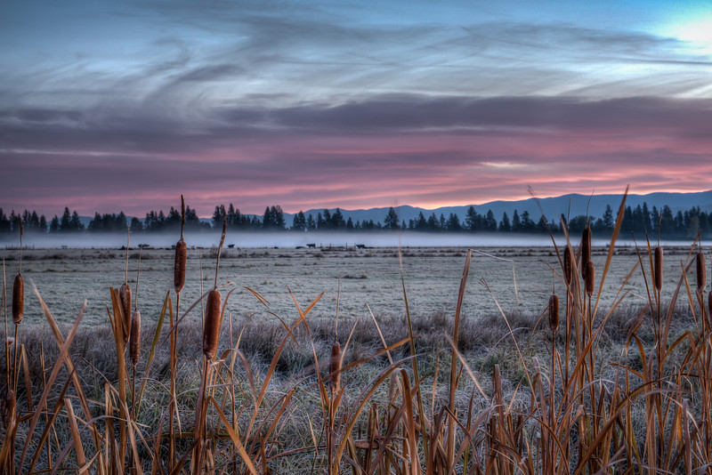 Twilight Over The Cattails - Bitterroot Valley, Montana