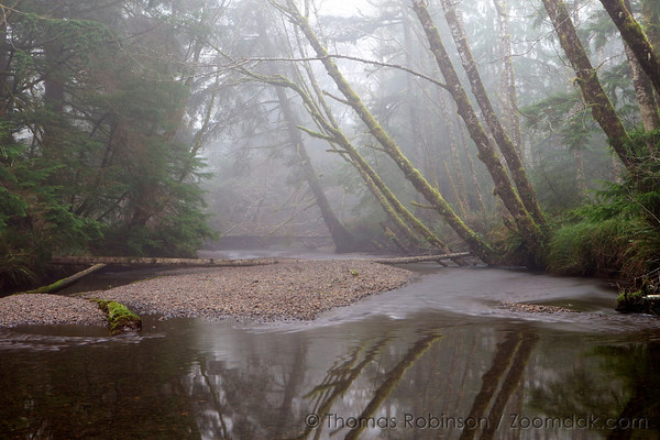 Ecola Creek in the Fog