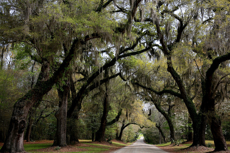Backroads - South Carolina